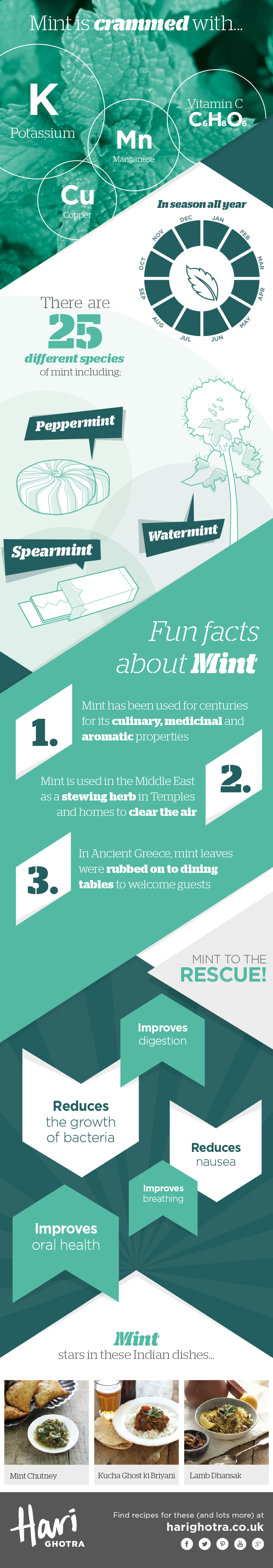 Mint Infographic showing the health benefits of Mint