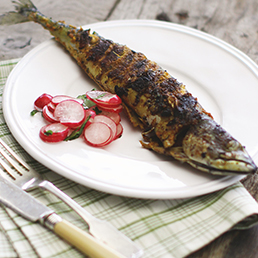 Mackerel Fry