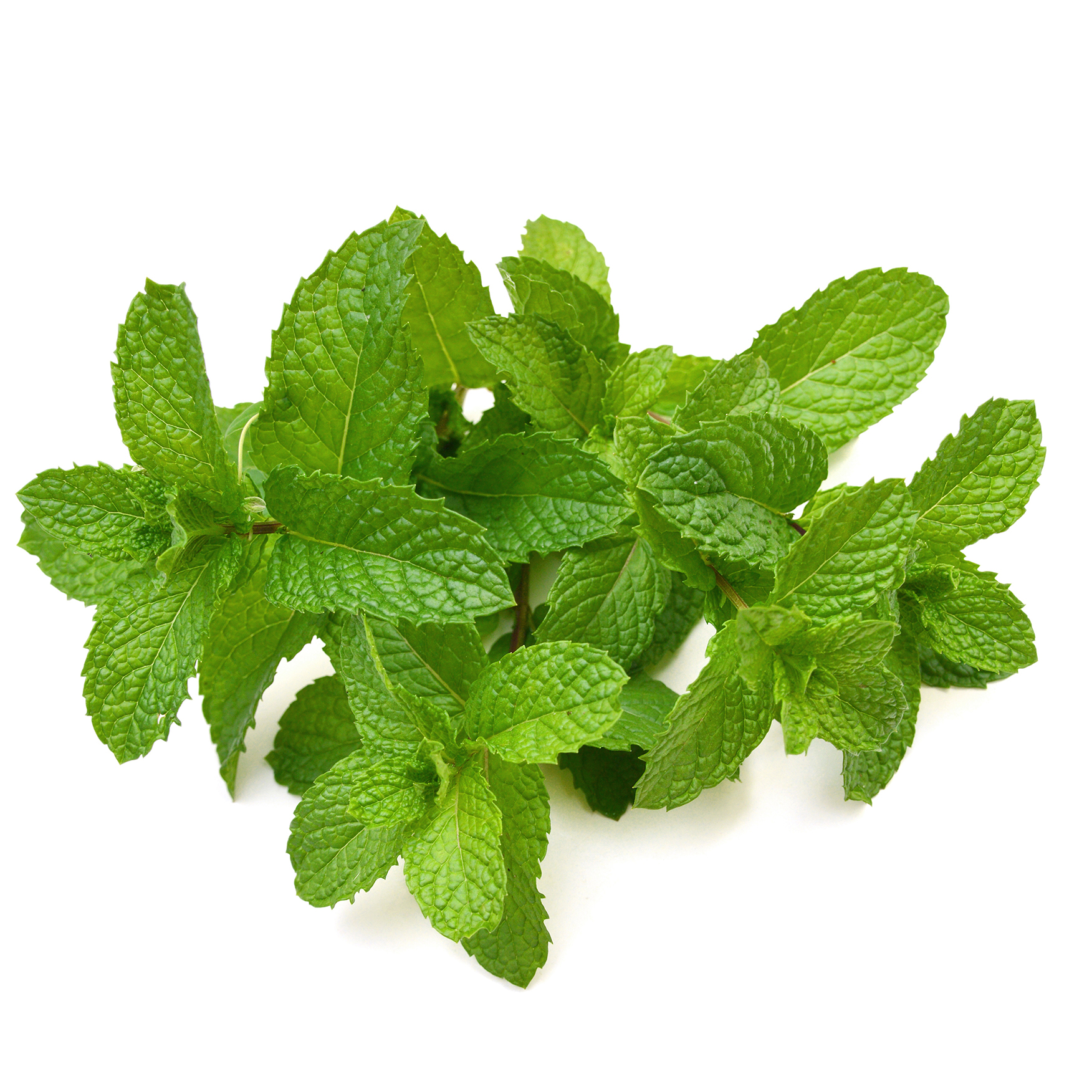 Mint (Pudina)